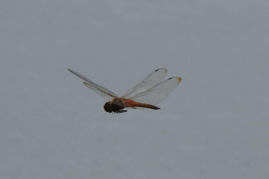 Wandering Glider at TTF